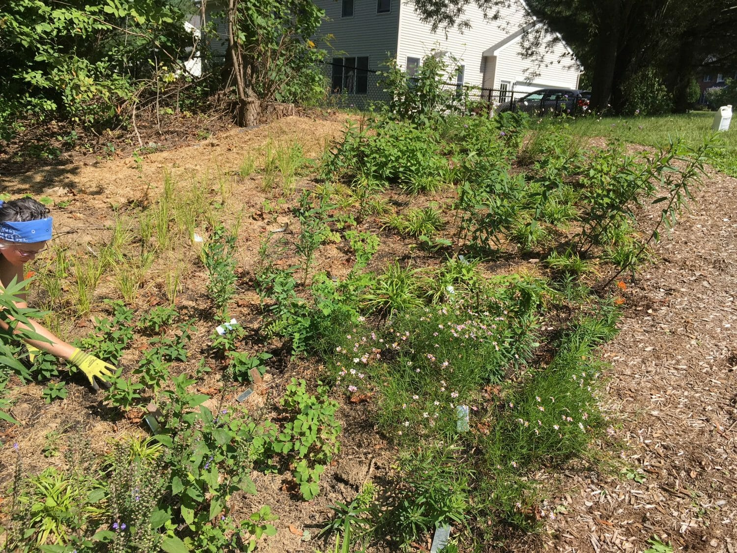 Pollinator native planting Slingerlands NY - Native Plant Community Design, Installation, and Maintenance