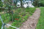 Redbud in native pollinator garden design 150x100 - Landscape Design Portfolio Albany's Capital District