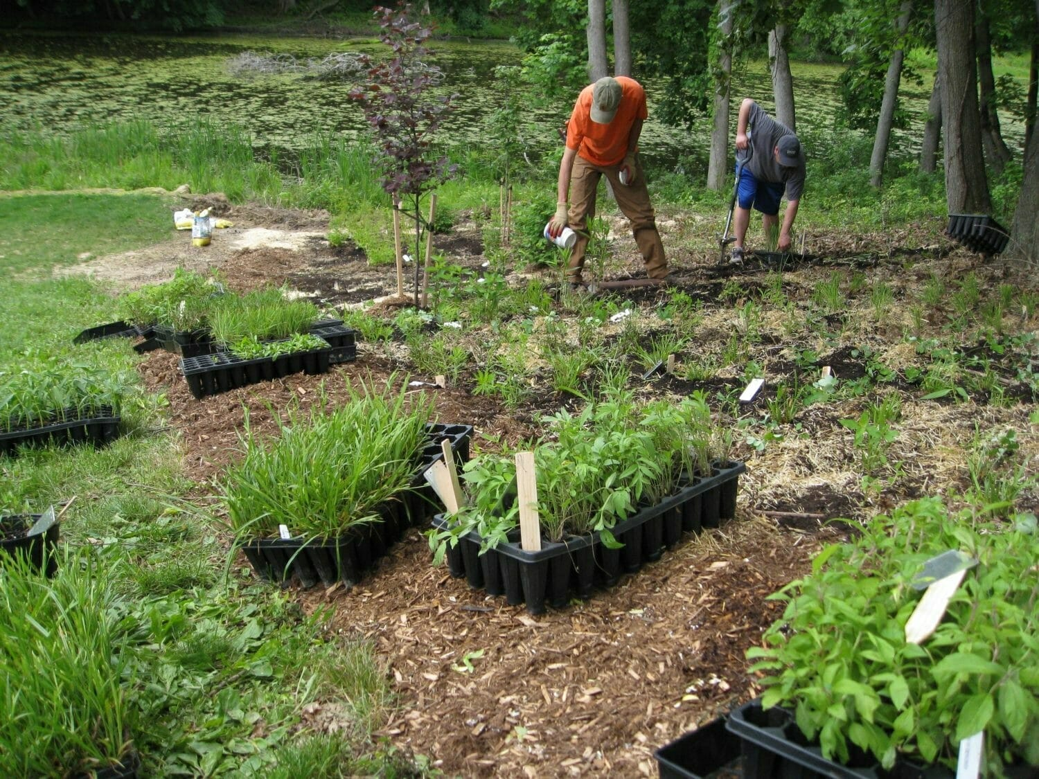 john kelly installing native perennials - Native Plant Consulting and Design