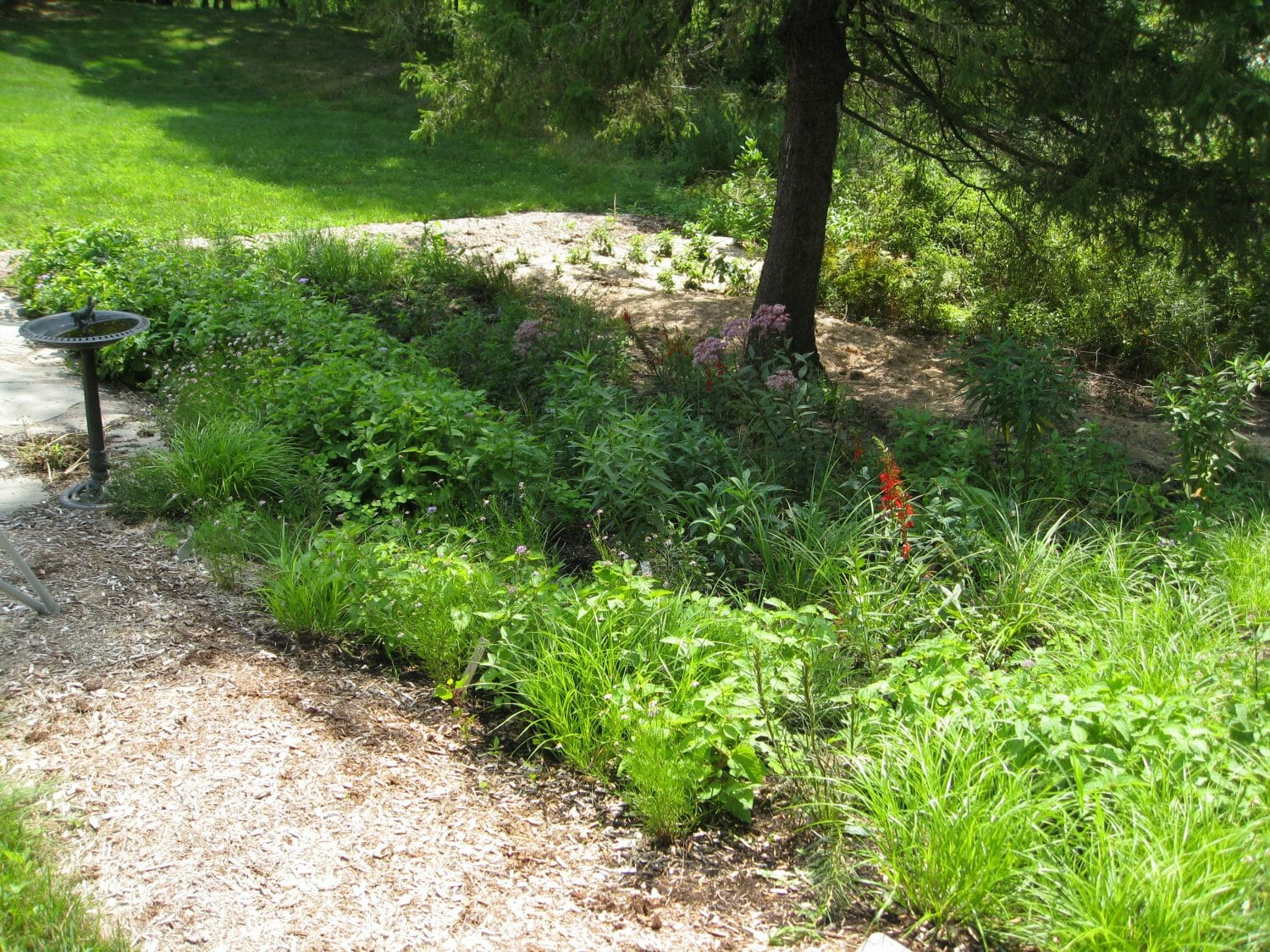 native garden 2 months after planting - Native Plant Community Design, Installation, and Maintenance