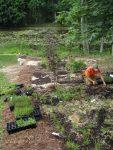 native garden installtion slingerlands ny 113x150 - Landscape Design Portfolio Albany's Capital District