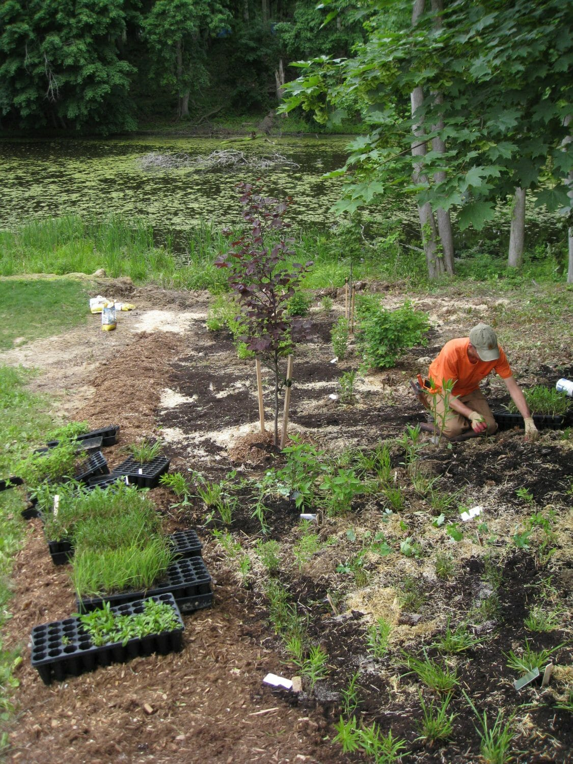 Native garden installtion slingerlands ny