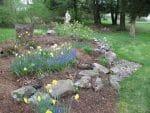 Averill Park NY naturalistic spring garden design 150x113 - Landscape Design Portfolio Albany's Capital District