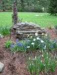 Averill Park NY naturalistic spring garden designs 113x150 - Landscape Design Portfolio Albany's Capital District