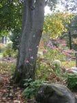 Averill Park NY woodland garden designer 113x150 - Landscape Design Portfolio Albany's Capital District