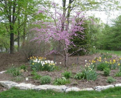 Woodland Understory Garden Design Latham, NY