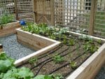 latham ny raised beds vegetable garden 150x113 - 2018 Landscape Design Portfolio page