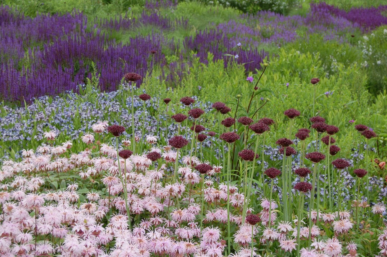 Creating native perennial plant communitiies for Lurie garden planting plan